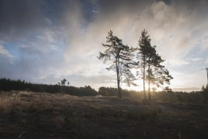 Hogmoor Inclosure